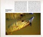 Peacock-au-Surinam-page-005-150x131
