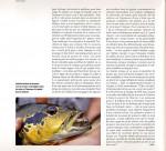Brésil-page-6-pg-150x136