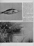 article-10-2012-le-brochet-au-poisson-mort-suite-page2jpg-109x150 dans L'article technique