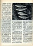art 06-2014 Pêche du gardon en étang 2 page 6