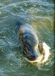 art 12-2014 Le matériel du pêcheur au vif page 1