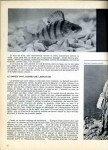 art 12-2016 Un poisson qui rend fou, la perche page 3