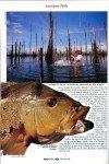art 10-2018 Le poisson paon page 5
